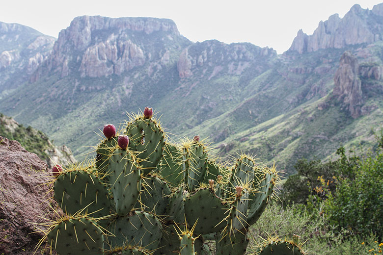 #SwellAdventures with Jessica Pullin and her S'well water bottle at Big Bend National Park in Southwest, Texas